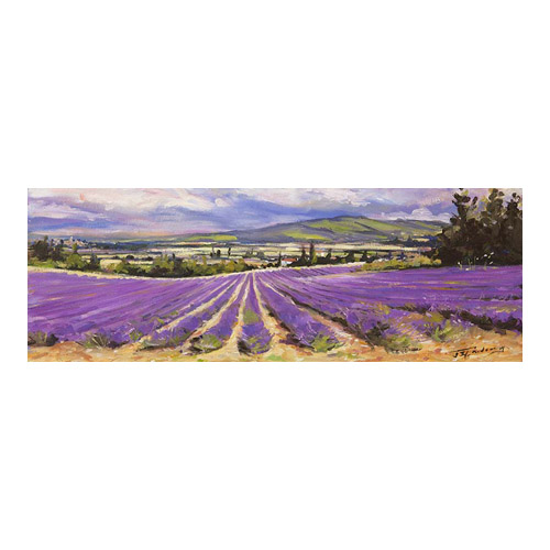 Lavender of the Vaucluse